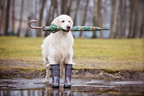 dog ready